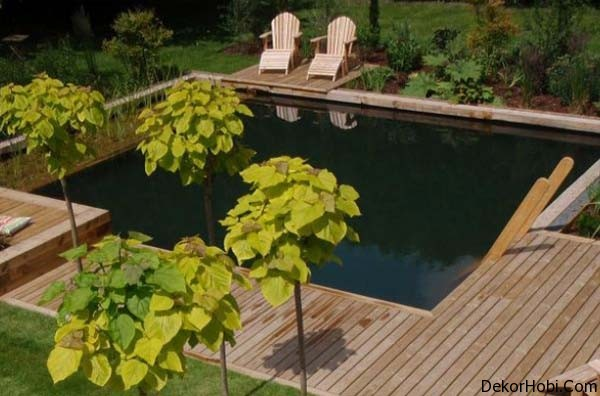 natural-swimming-pools-10