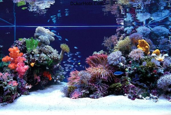 An-aquarium-that-truly-looks-out-of-this-world