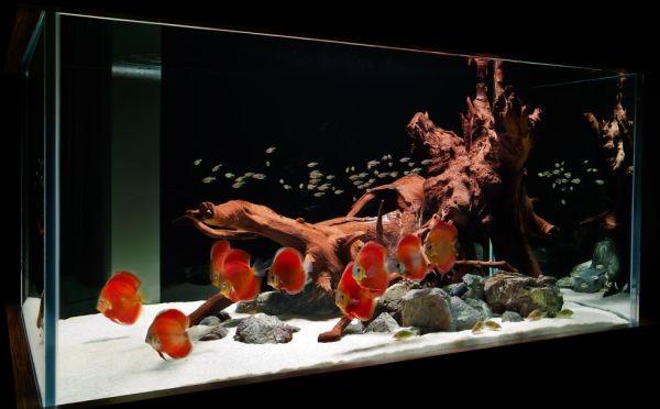 kırmızı tonlarda tasarlanmış çağdaş akvaryum modeli