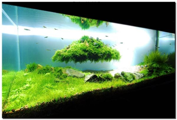 Stunning-fish-tank-design-that-really-kicks-in-with-the-green