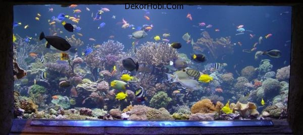 Stylish-Fish-tank-all-about-creating-the-cool-blue-ocean-indoors