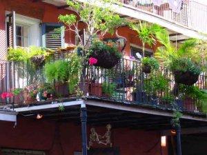 Balkon-Bitkileri