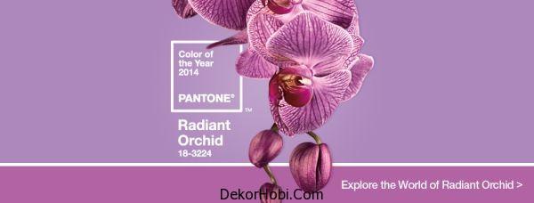 Radiant Orkide